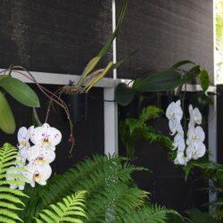 20201015 DSC 0781 Orchids 2 250x250 - 1/1 Latitude Blvd