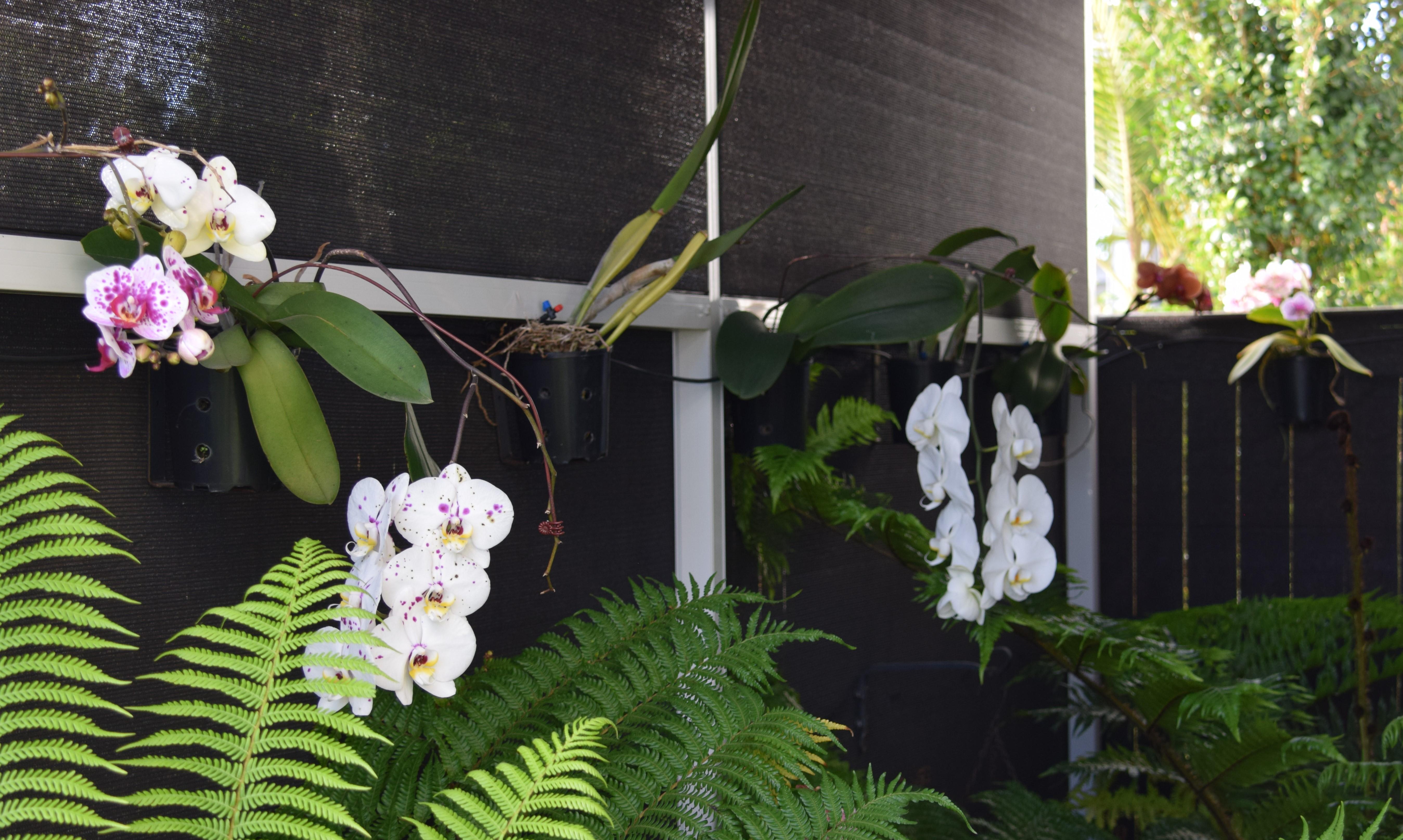 20201015 DSC 0781 Orchids 2 - 1/1 Latitude Blvd
